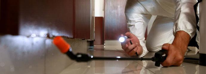 Pest-Control-Service-Brisbane-1.jpg