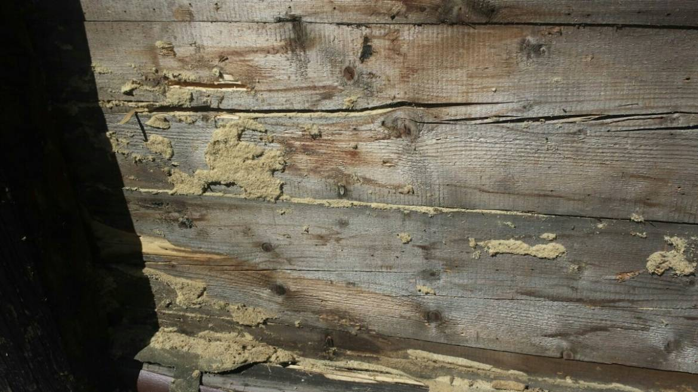 Holz-_und_Bautenschutz2_124_5f804b8d3184.jpg